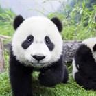 Корейские патчи: что приложить, если в зеркале - панда?